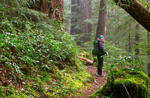 hiker on suiattle river trail randy g