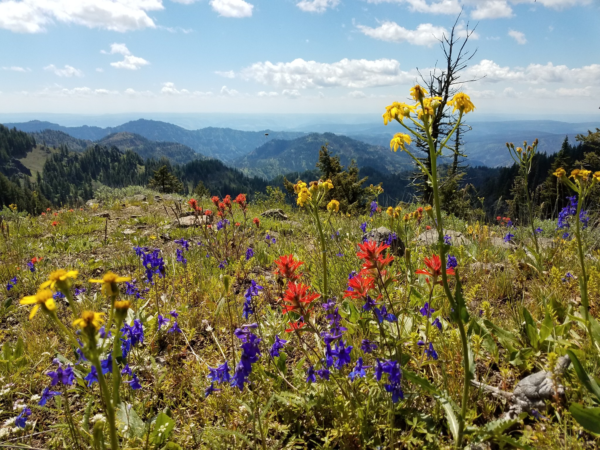 The Blue Mountains of Southeast WA Photo by jordankress.jpg