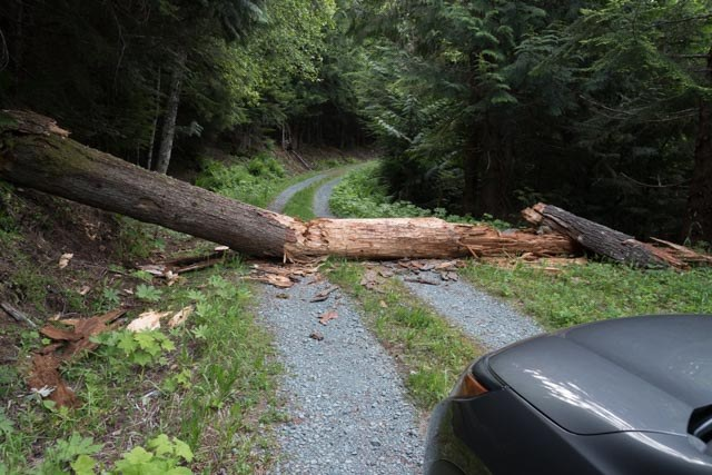 Downed tree on road to Welcome Pass