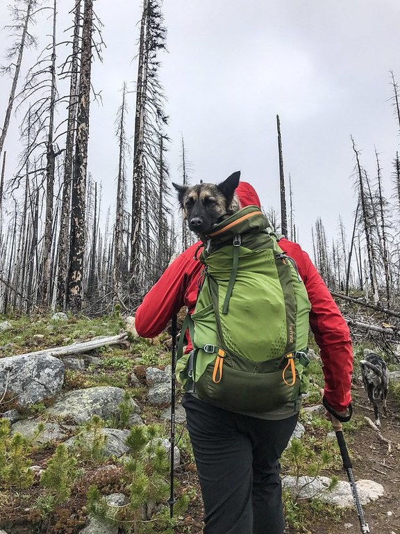 Tehya catches a ride in a backpack after injuring their paw at Tiffany Mountain.