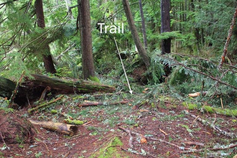 trail onehundredmilesayear.jpeg