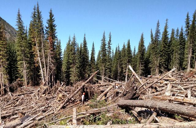 trees down at snowall lake mcbride