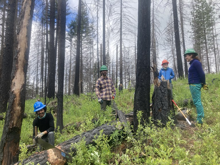 Crew leader Zachary saws through a log, with crew members Zach and Ginerva in the background.