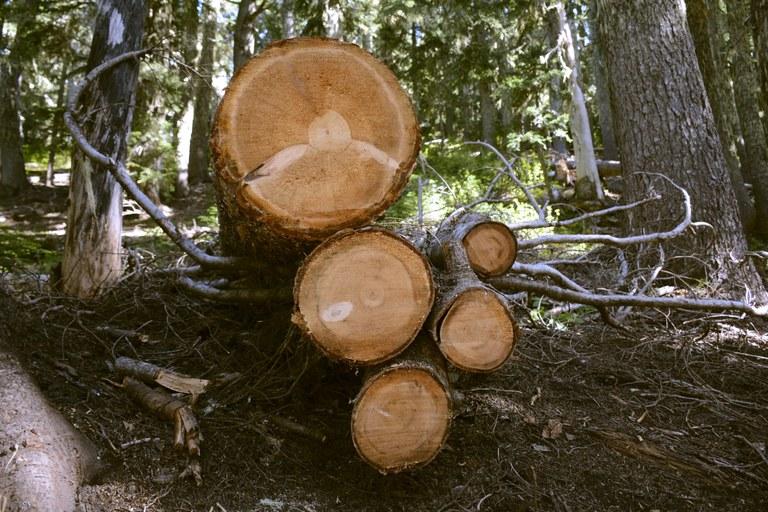 Logs on Angry Mountain.jpg