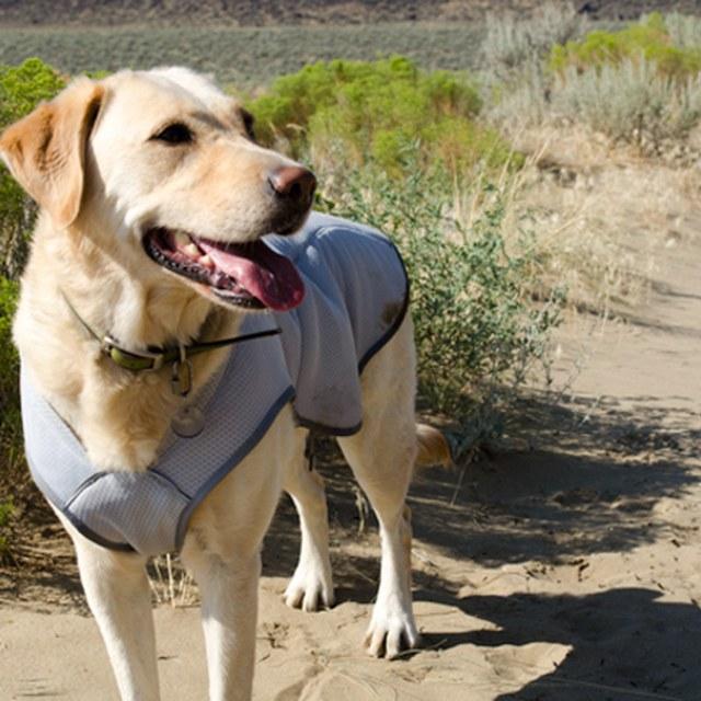 Treen testing the vest