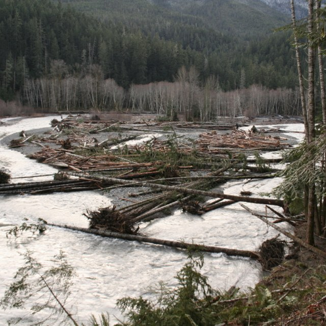Flooding in the Elwha River Valley. Photo courtesy Olympic National Park.