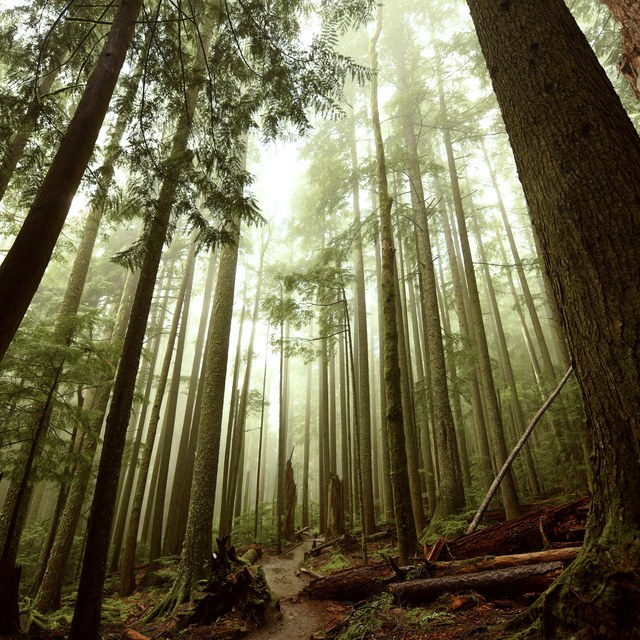 1st Place, Trailscapes. Photo taken by Alyssa Tidwell from Mount Si.