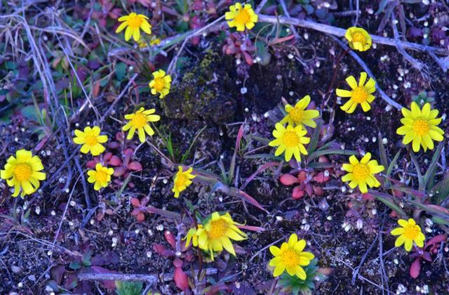 Horsethief Butte flowers