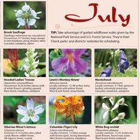 Flower Guide Image May/June 2012 magazine