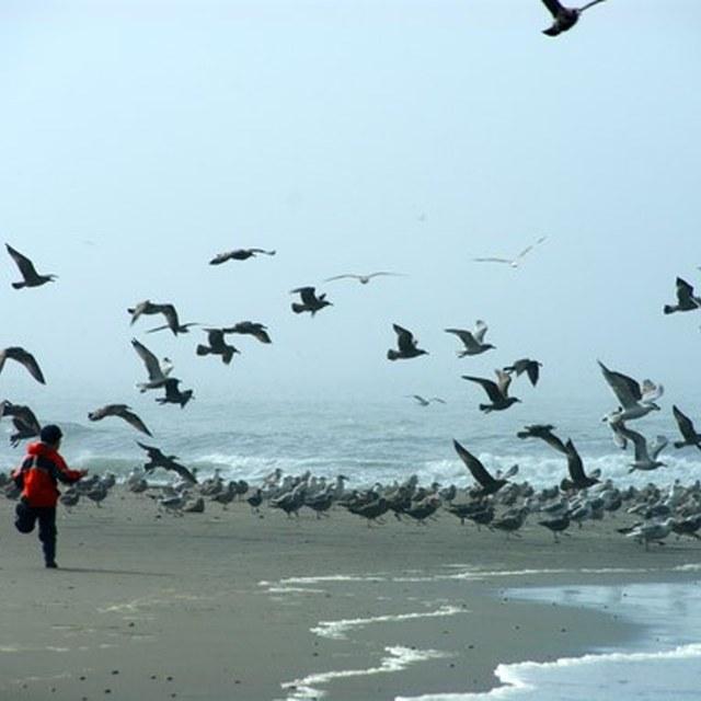Boy chasing seagulls second beach