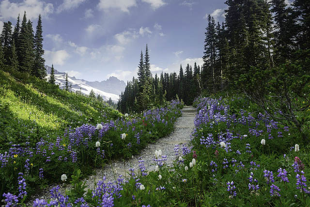 Help protect trails as WTA's ED
