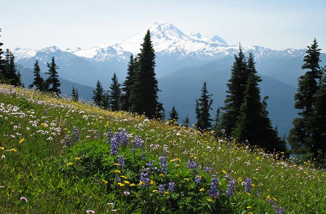 Mount Baker from Excelsior Dave Hower
