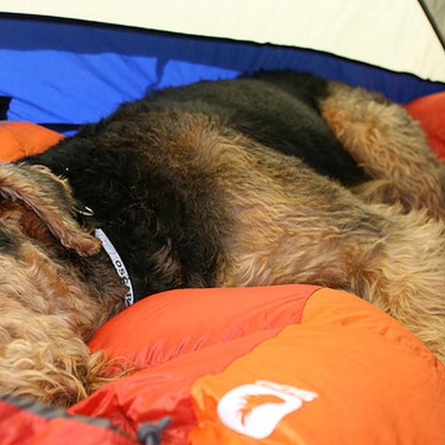 Sleepy Pup in Tent (no logo)