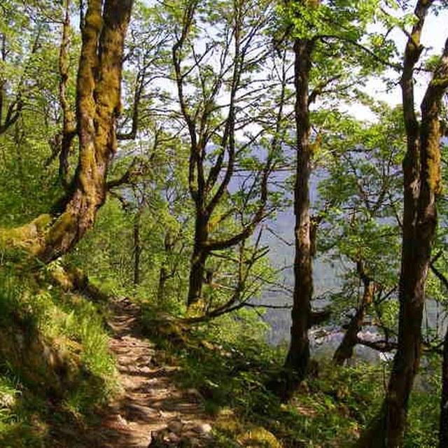 Lake 22 trail Pith Helmut Jack.jpg