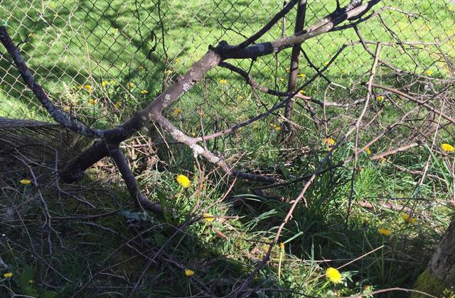 Loren's backyard tyler lepard
