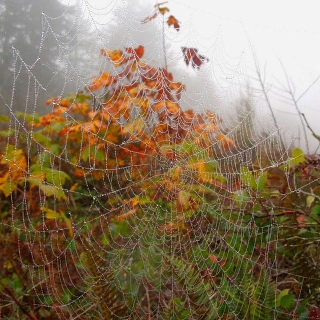 Spider Web Wallace Falls