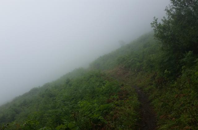 Foggy trail green mountain loren drummond