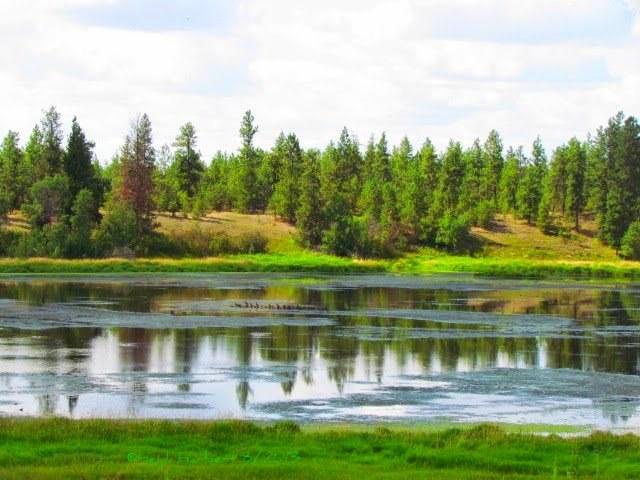 Slavin Pond