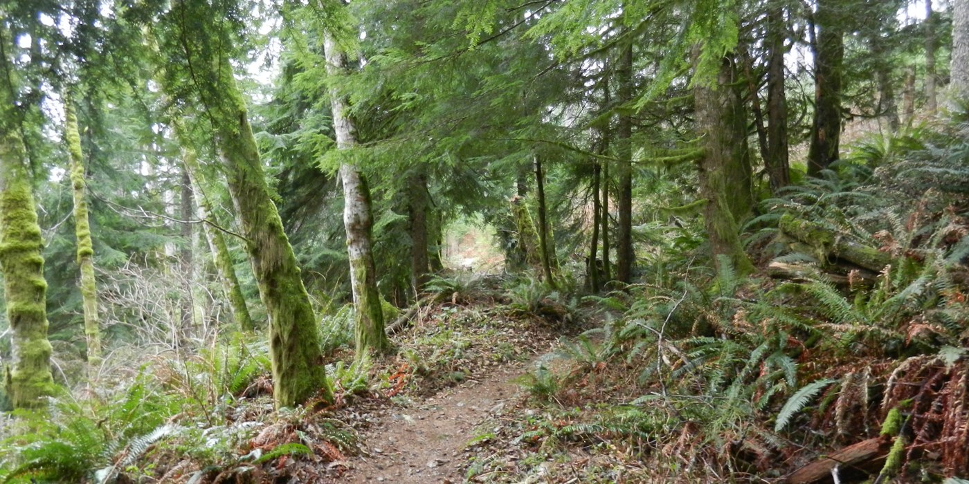 The Silent Swamp Trail on the old logging railroad grade.
