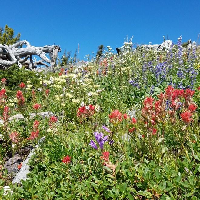 Wildflowers approaching the peak/summit